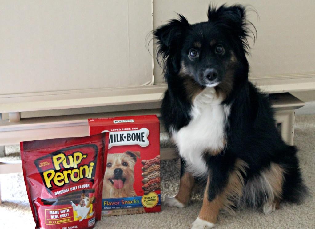 dog valentine's day treats