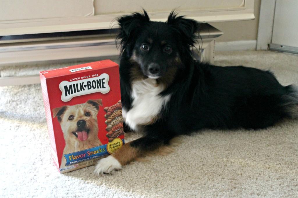 milk-bone treats