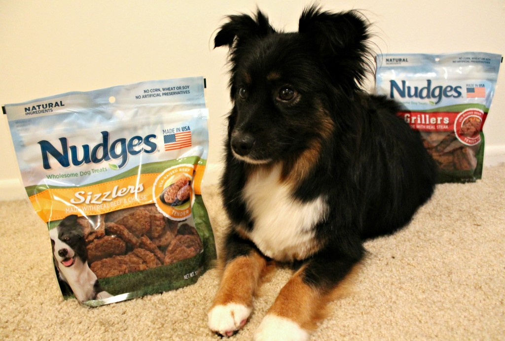 Good Dog Treats - Nudges