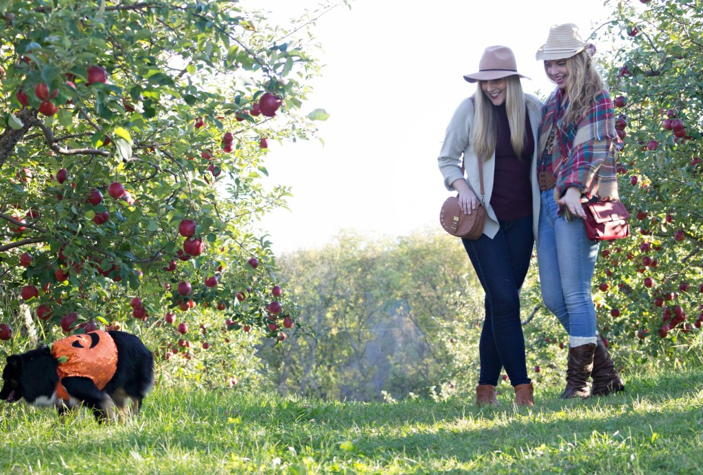 apple-orchard-fun