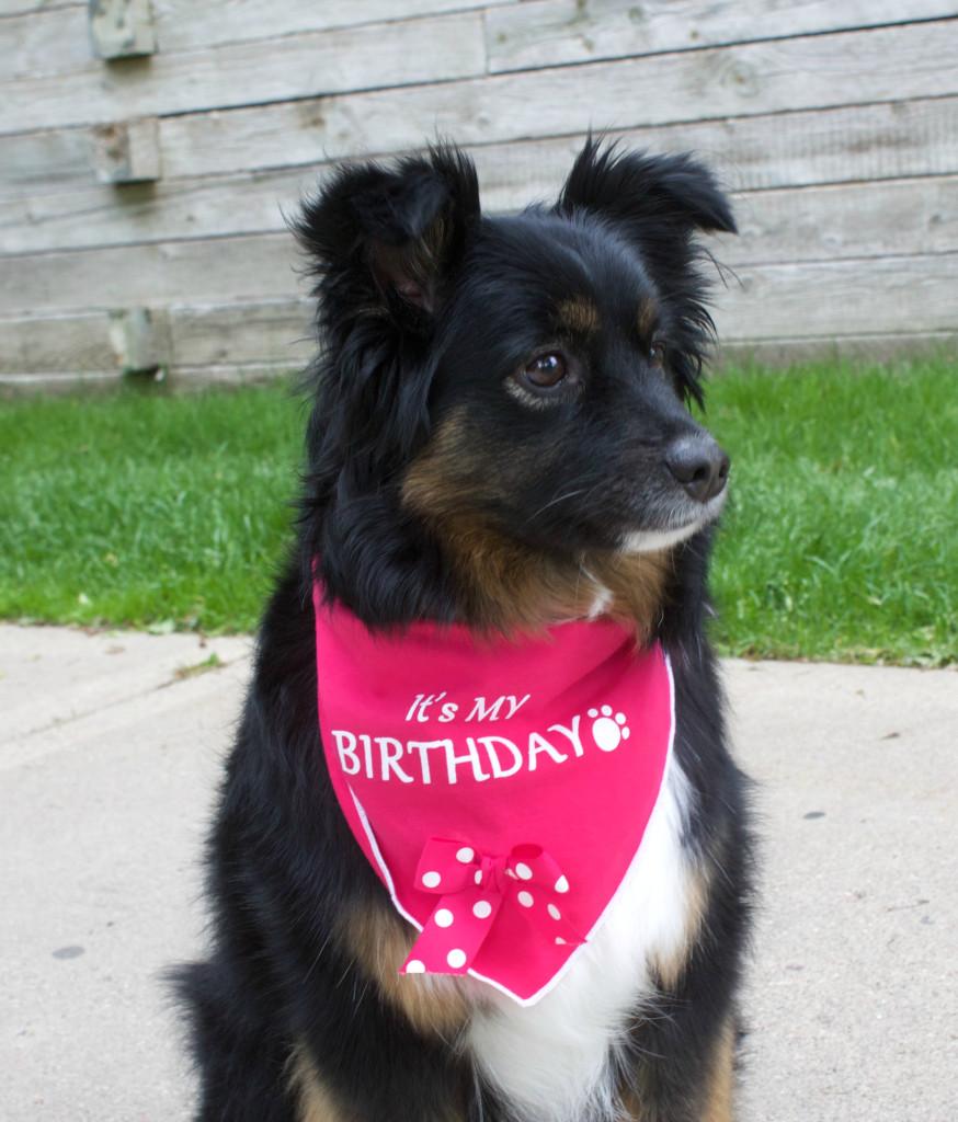 Emma the dog's birthday